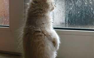 Можно ли ставить окна в дождь